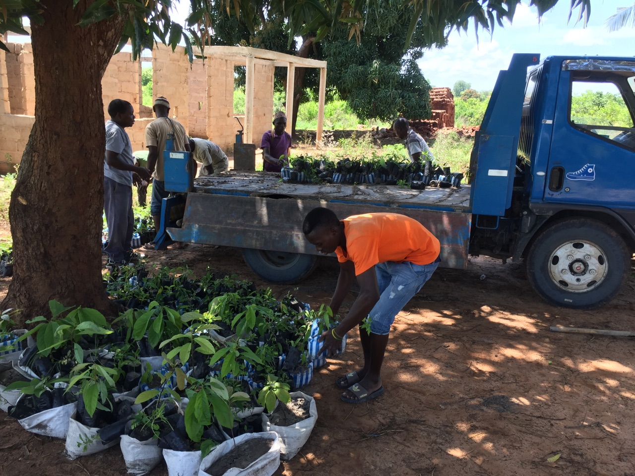 Transportation of seedlings to planting site