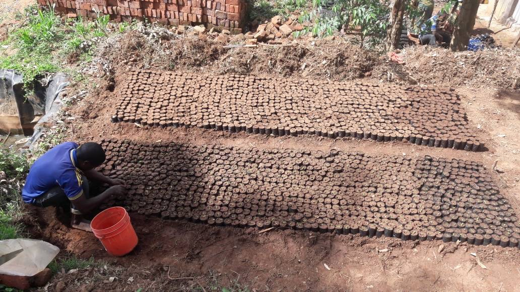 First seed beds made ready at Yoghoi
