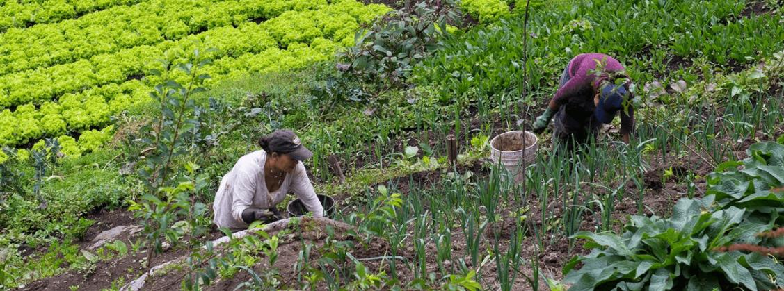 """Colombian women farmers on the field are part of the project """"Sembrando la confianza de las mujeres"""""""